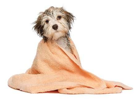 Mobile Dog Washing Adelaide Hills
